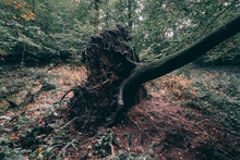 Shot Of An Uprooted Tree In A Forest