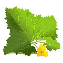 Green Leaf Of Melon With Yellow Flower, Vector Image.