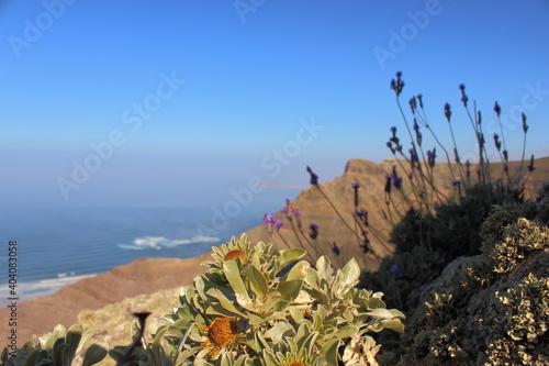 Obraz Close-up Of Cactus By Sea Against Clear Blue Sky - fototapety do salonu