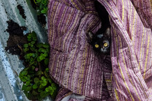 Cat In A Rooftop With A Blanket