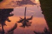 Reflection Of Trees In Puddle During Sunset