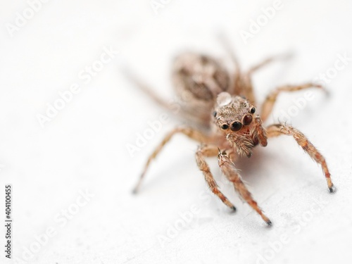 Fotografering Close-up Of Spider On White Background