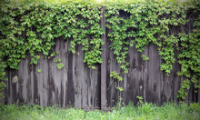 Background With Dark Grey Wooden Fence And Green Plants