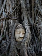 Buddha Head In Tree Ayutthaya Thailand Travel Concept, Wat Mahathai ,Phra Nakhon Si Ayutthaya, Historical Park A Historical Park In Ayutthaya, One Of The Famous Temple In Ayutthaya