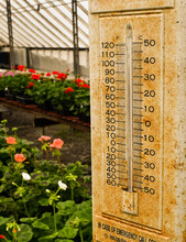 Rusty Vintage Thermometer In Greenhouse With Flowers