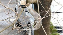 Squirrel Is Eating Bird Food From Bird Feeder