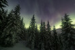 Northern lights over a beautiful fir forest near Tromso, northern Norway