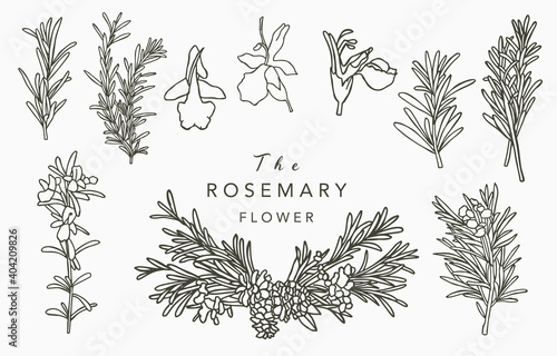 Line herbal collection with rosemary Fototapeta