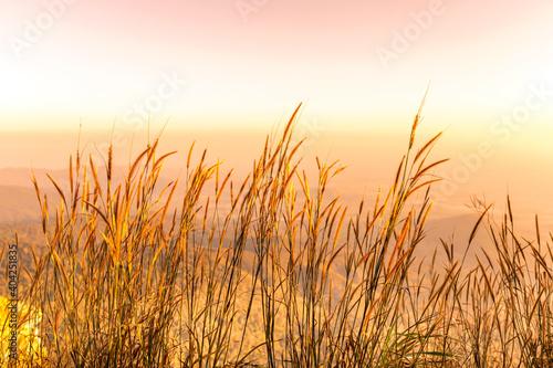 Fototapeta Beautiful sunset on the mountain in Ramkhamhaeng national park, Sukhothai province, Thailand