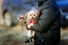 Sylwetka Człowieka Trzymającego Małego Psa Na Rękach