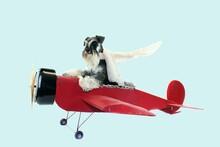 Dog Pilot Plane Miniature Schnauzer