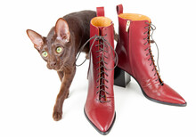 Cat And Red Shoes Isolated On White