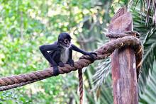 Xcaret Park-Riviera Maya-Mexico-the Monkey 2