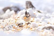 Close-up Of Bird Perching On Ground