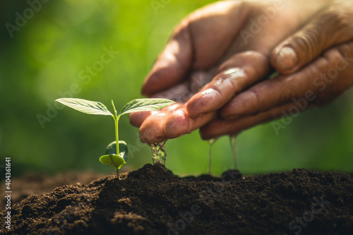 Obraz Cropped Hands Of Person Watering Plants - fototapety do salonu