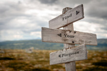 Find Your Purpose Signpost Outdoors In Nature