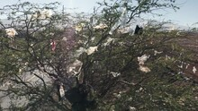 Plastic Pollution Problem. Non-degradable Consumer Shopping Plastic Bags Stuck On Green Tree Branches. The Cause Of The Climate Change And Global Warming After Greenhouse Effect. Aerial Landfill 4K