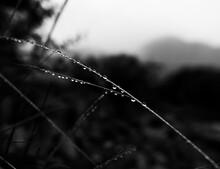 Close-up Of Wet Spider Web During Rainy Season