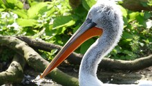Side View Of A Pelican On Tree