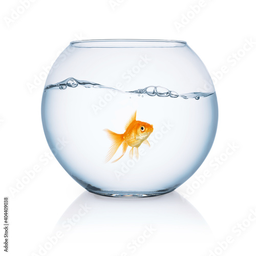 Obraz Close-up Of Goldfish In Bowl Against White Background - fototapety do salonu