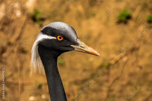 Fototapeta premium Close-up Of A Bird