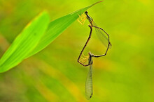 Extreme Close-up Of Insects Mating On Leaf