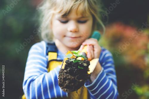 Fotografiet Adorable little toddler girl holding garden shovel with green plants seedling in hands