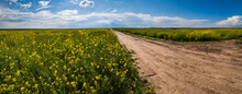 Road Through Spring Rapeseed Yellow Blooming Fields Panoramic View, Blue Sky With Clouds And Sunshine. Natural Seasonal, Good Weather, Climate, Eco, Farming, Countryside Beauty Concept.