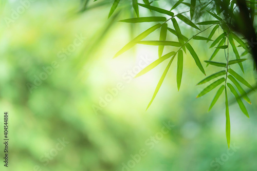 Fototapety, obrazy: Closeup beautiful view of nature green bamboo leaf on greenery blurred background with sunlight and copy space. It is use for natural ecology summer background and fresh wallpaper concept.