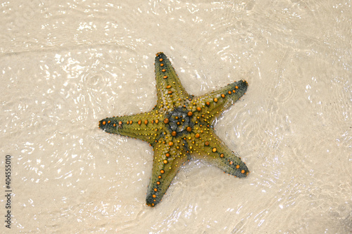Obraz na płótnie A beautiful yellow starfish lies on the white sand and is washed by the clear, transparent and warm waves of the ocean