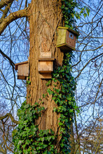 Wooden Birds House In The Tree