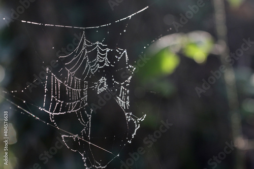 spider web with dew drops Fototapeta
