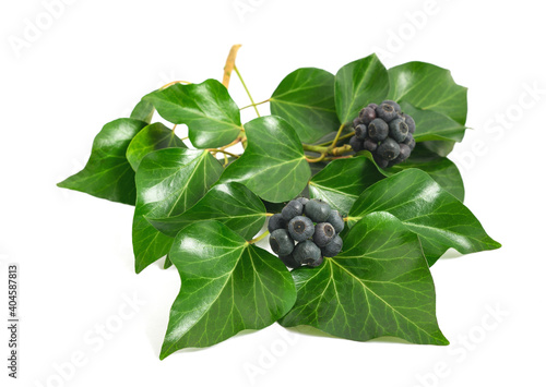 Fotografie, Obraz Ivy branch with berries