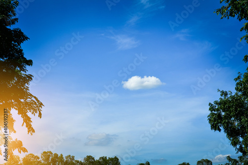 Photo Low Angle View Of Trees Against Blue Sky
