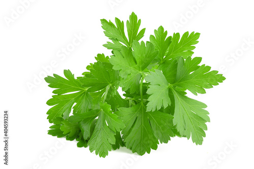 Fototapeta Parsley bunch obraz