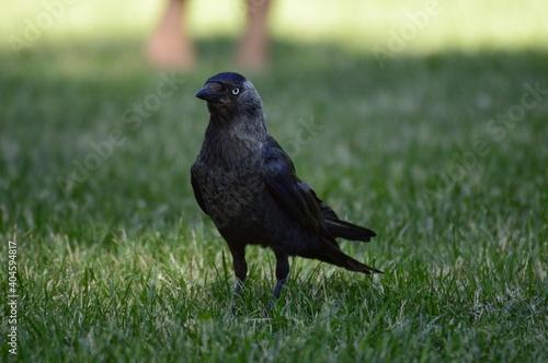 Fototapeta premium Close-up Of A Bird On Grass