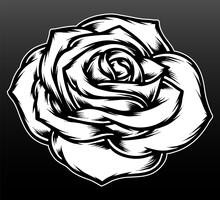 Black White Rose Flower