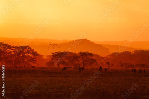 Evening landscape with many animals in Kenyan savanna in yellow and orange colors © Sergey Novikov
