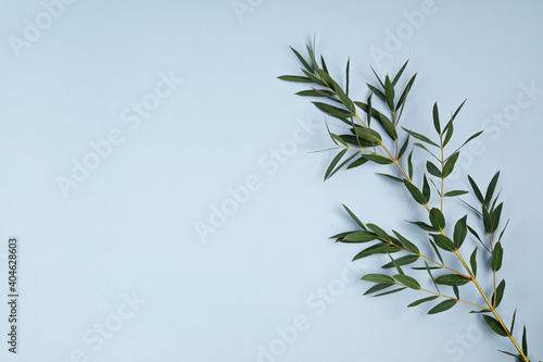 Canvas Print Eucalyptus branch on pastel blue background with copy space