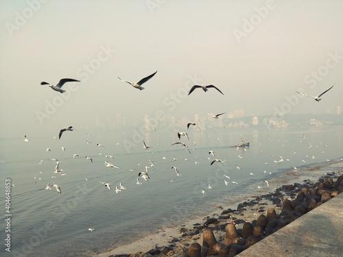 Fototapeta premium Flock Of Birds Flying In The Sky