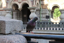 Pigeon Perching On Railing Against Building