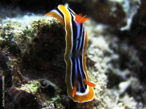 Fotografia red sea anemone