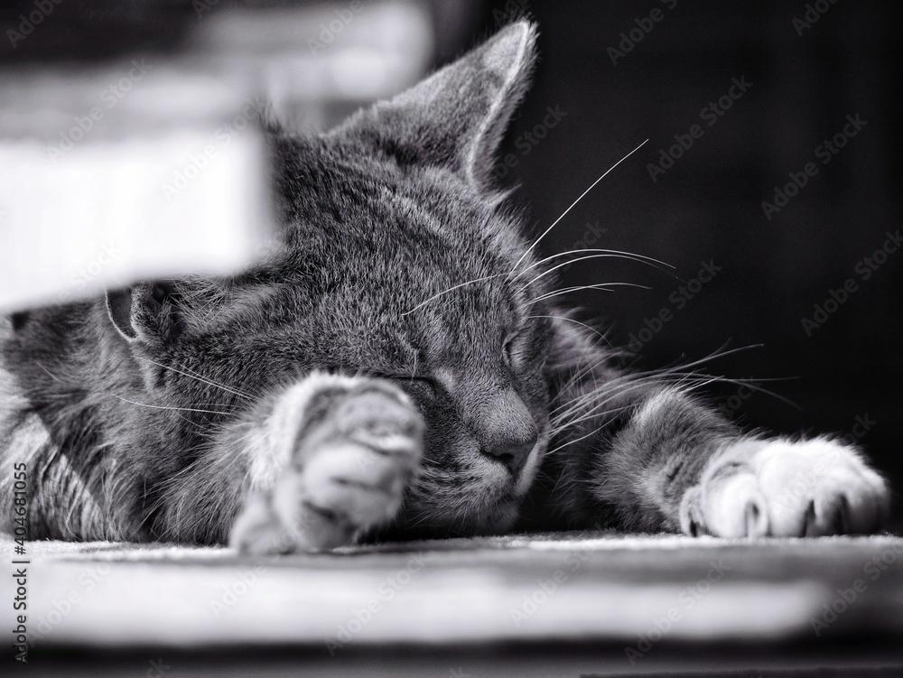 Fototapeta Close-up Of Cat Resting