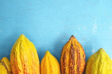 Fresh And Ripe Bright Yellow Orange Cocoa Pods Or Theobroma Cacao Tree Fruit In Flat Lay In Blue Background With Copy Space.