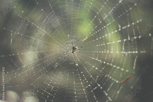 Close-up Of Spider Web Fototapet