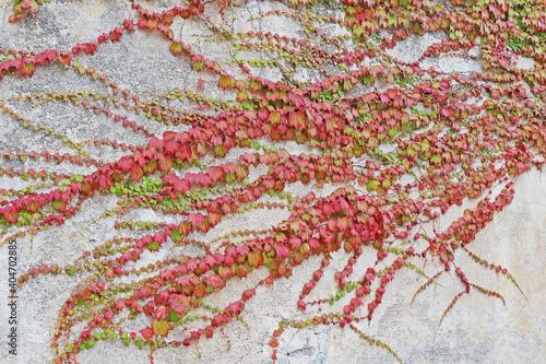 Photo Creeper Plants Growing On Wall