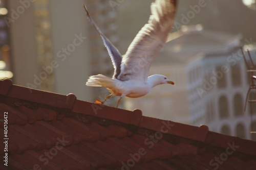 Fototapeta premium Low Angle View Of Seagull On Roof