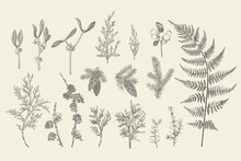 Set Of Christmas Plants.
