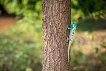 Lizard Crawling On Tree Trunk