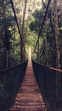Wooden Footbridge In Forest